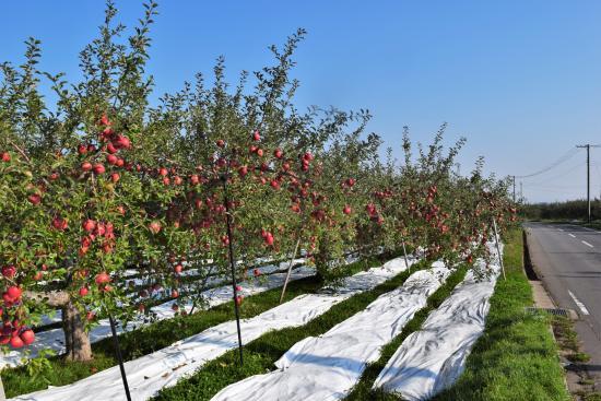 Apple Road