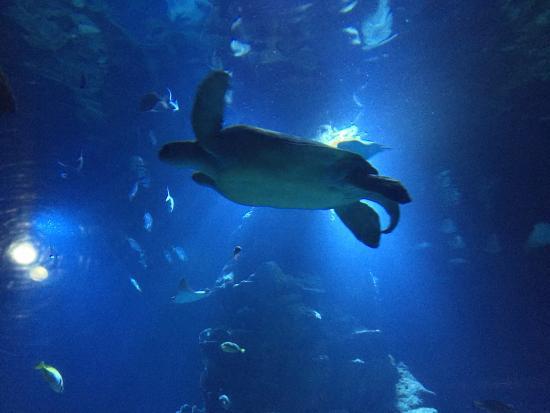 London Aquarium Picture Of Sea Life London Aquarium