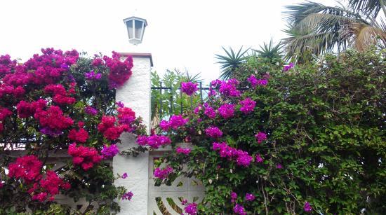 La Quinta Park Suites: Na północy Teneryfy roślinność wprost zachwyca.