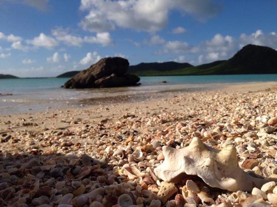 Boat Trips Antigua: Shells on an antiguan Beach