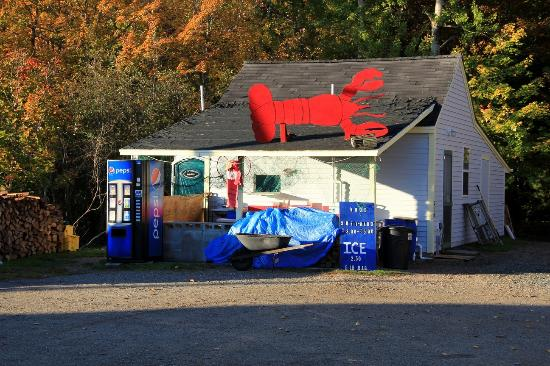 photo0.jpg - Picture of Travelin Lobster, Bar Harbor ...