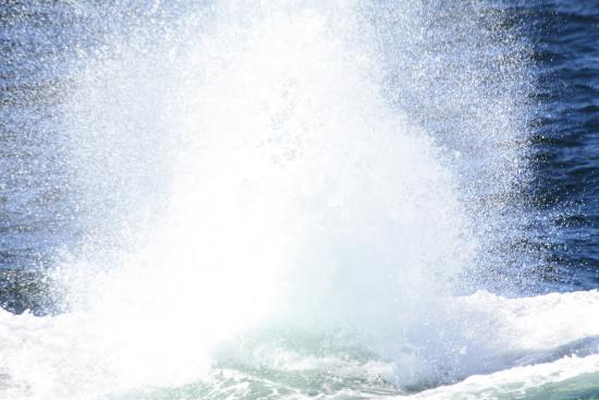 Barnstable, MA: There she blows