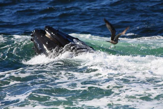Hyannis Whale Watcher Cruises : Hey leave some me please Mr Whale