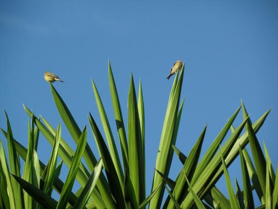 Santa Ursula, Spanje: Fauna i flora taka piękna jest tylko na północy wyspy