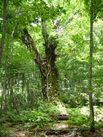 Dakedai Nature Observation Woods 사진