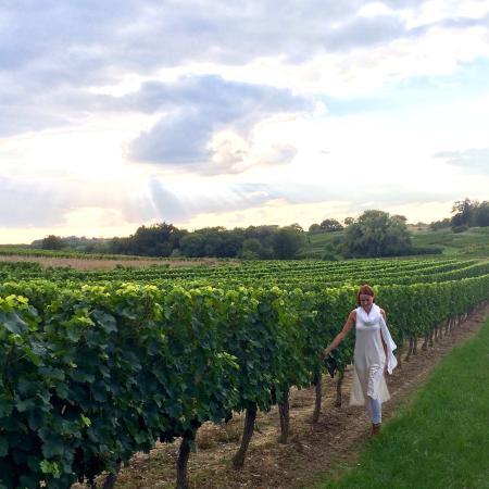 Lugon-Et-L'Ile-Du-Carnay, Frankrig: Vineyards