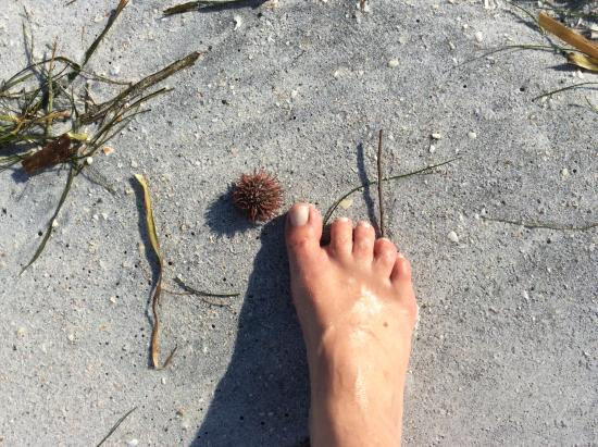 Boca Grande, FL: Sea life washed ashore
