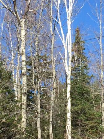 Twin Mountain, NH: photo0.jpg