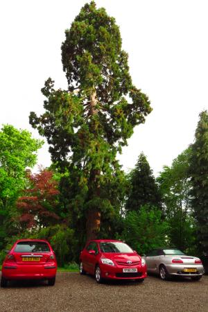 Beechgrove Guest House: The backyard