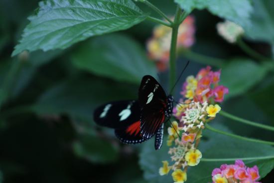 Butterflies Gardens Picture Of Victoria Butterfly Gardens Central Saanich Tripadvisor