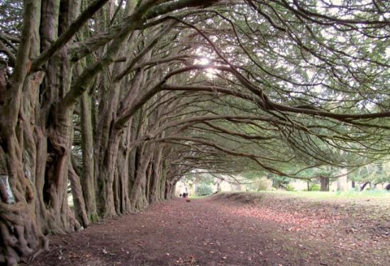 Clonegal, Irland: Yew Walk