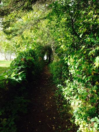 Nominingue, Canada: Vine Path to lake