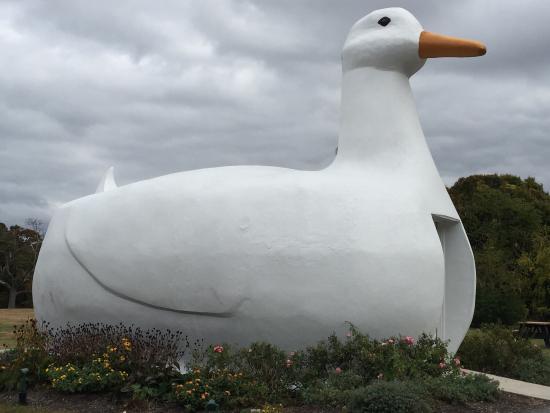 Big Duck pics xhamster lesbische Porn Movies