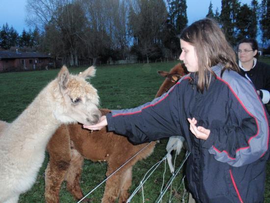Rotorua Hideaway Lodge: Nice llama....