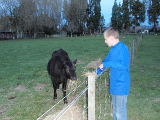 Rotorua Hideaway Lodge: Hmm... do I trust him?