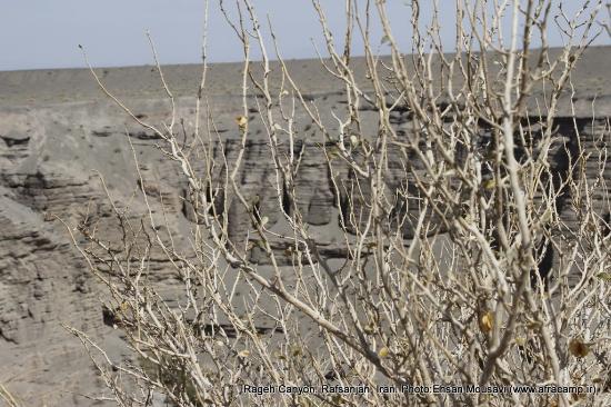 Rafsanjan, Iran: Rageh canyon