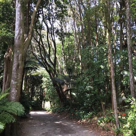 New Plymouth, Nuova Zelanda: study in trees