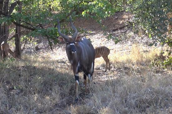 Shimuwini Bushveld Camp: Prachtig toch?