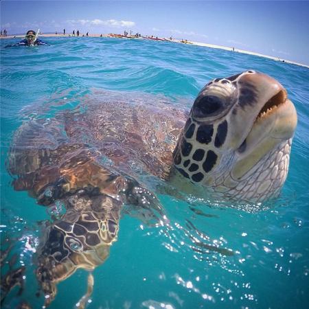 Aqua Waikiki Pearl: Вот такое с нами плавало в океане