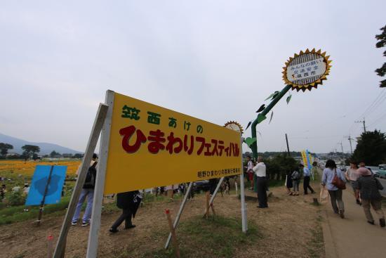 宮山ふるさとふれあい公園, ひまわりフェス