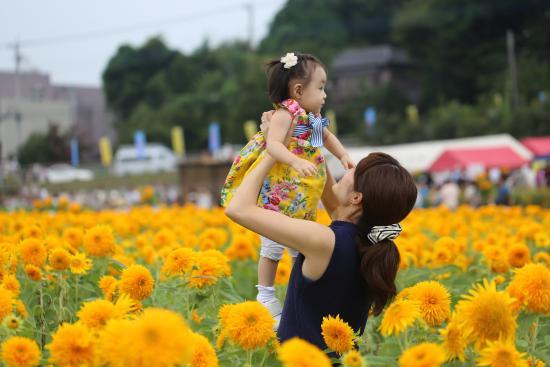 宮山ふるさとふれあい公園, 八重咲きのひまわり