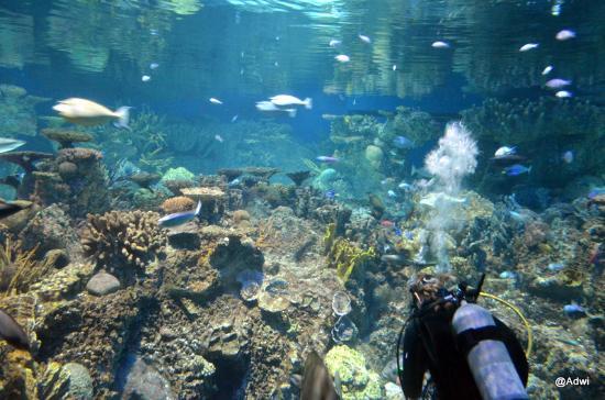 Baltimore Aquarium Dolphin Center Picture Of National