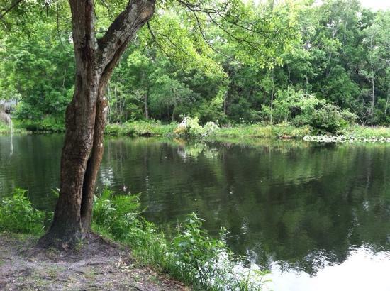Wimauma, FL: photo0.jpg