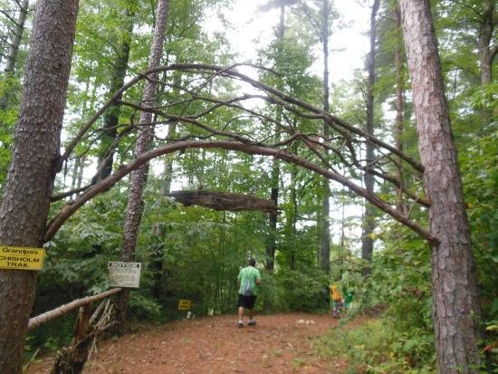 Tiger Creek Falls Inn : The enchanted forest