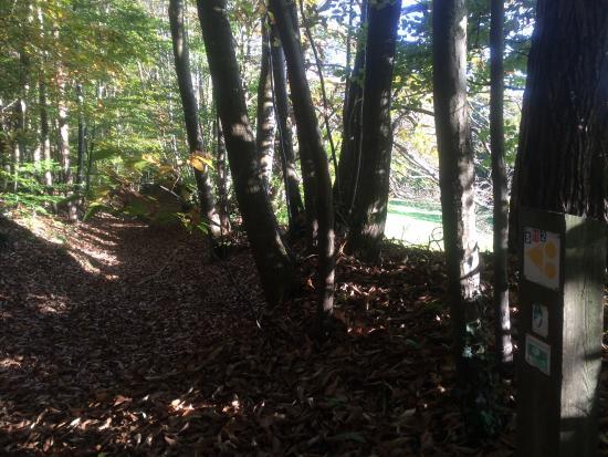Domfront, Prancis: Promenade escarpée sous les bois bucolique