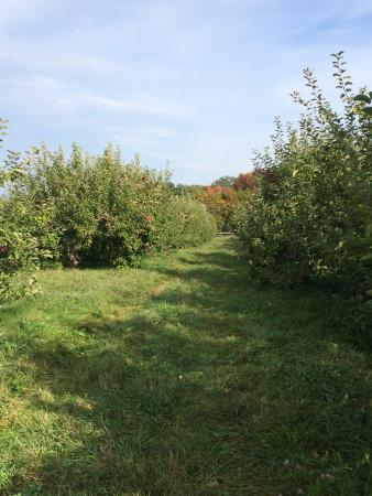 Shelburne Orchards: photo2.jpg