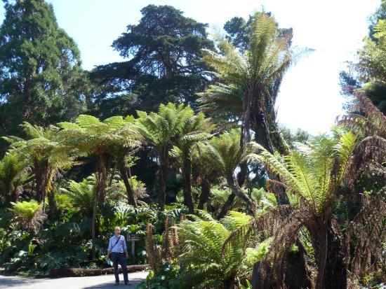 Botanic Garden Picture Of Golden Gate Park San Francisco Tripadvisor