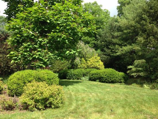 Goshen, Вирджиния: Backyard