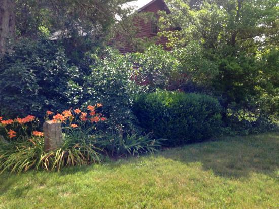 Goshen, فيرجينيا: Backyard