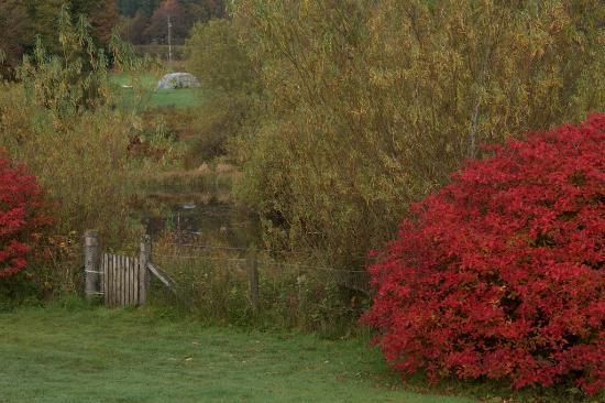 Gartmore, UK: Garden
