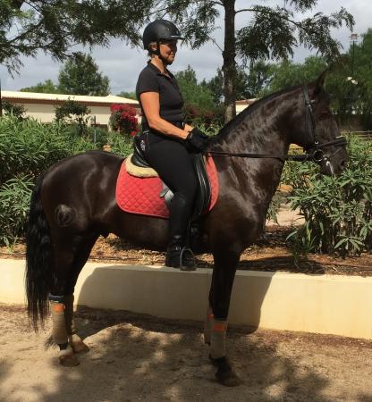 Real Picadeiro : My favorite black stallion
