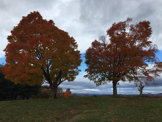 Amherst, MA: View of the trees in late October