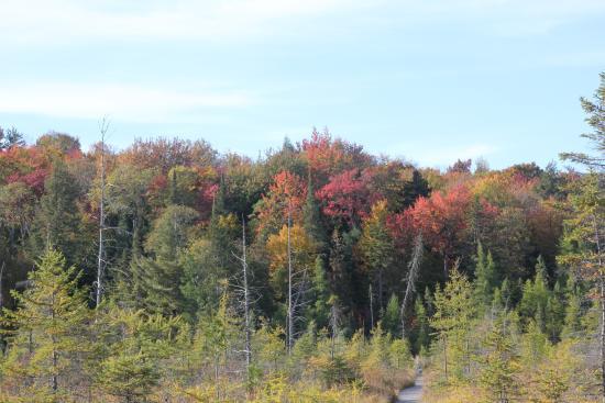 Paul Smiths, NY: boardwalk of Herron Marsh Trail Loop