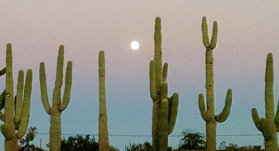 Rancho Sonora Inn: cactus giants in the front of the inn