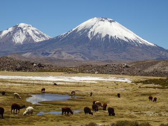 Putre, Chile: Volcán