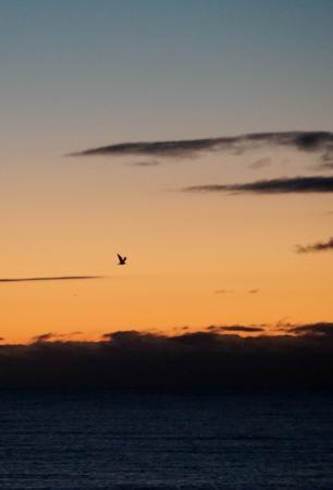 The Edgewater: Sunrise
