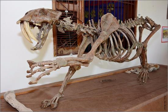 Museu Pre-Historia de Itapipoca