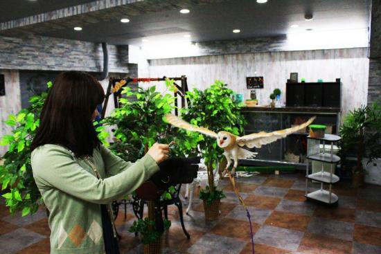 Toshima, Jepang: メンフクロウのフライト体験!!東京にある「体験型フクロウカフェ」あうるぱーくフクロウカフェ池袋西口で挑戦owlpark is an owl cafe in ikebukuro