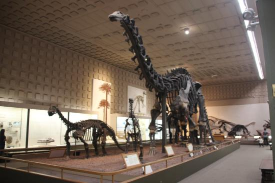 Yale Peabody Museum Of Natural History Reviews