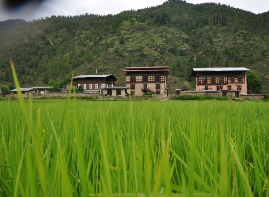 The Village Lodge, Paro