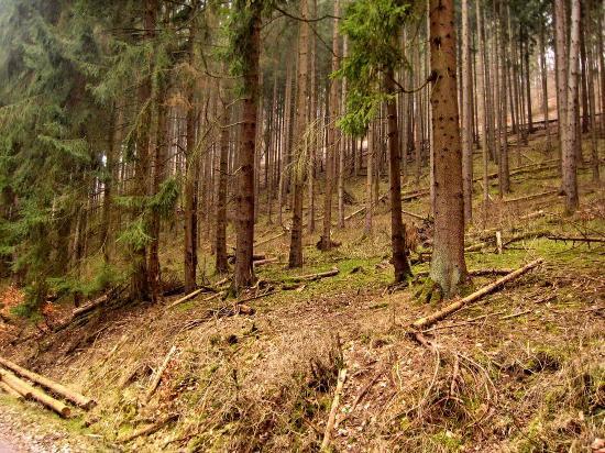 Dammbach, Deutschland: Umgebung direkt hinter dem Hotel