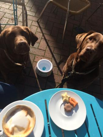 The Narrowbar Cafe: Teasel and Winston really enjoyed their biscuits