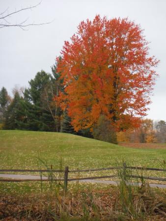 Hillman, MI: Fall Colors