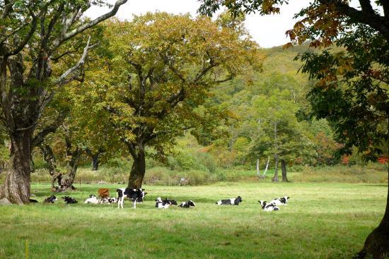 Kayanotaira Highland: 牧場