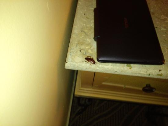 Hampton Inn Key Largo: 2 minutes before I took this pitcure, this big cockroach was crawling on me and woke me up!
