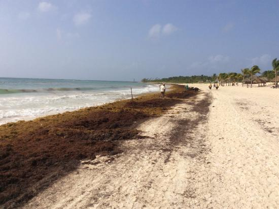 Bad Day of Seaweed - Picture of Secrets Maroma Beach Riviera